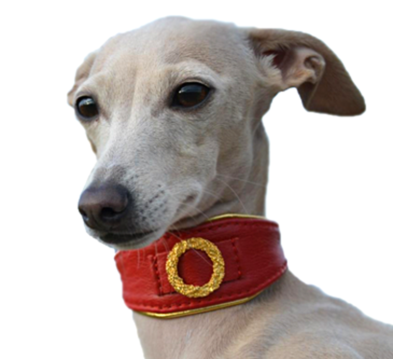 Italian Greyhound Collars