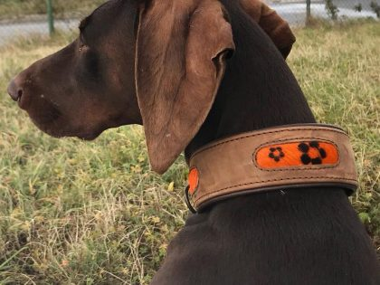 Radio Koper about Houndtribe collars