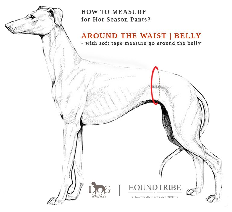 houndtribe-dog-hot-season-pants-Measurements