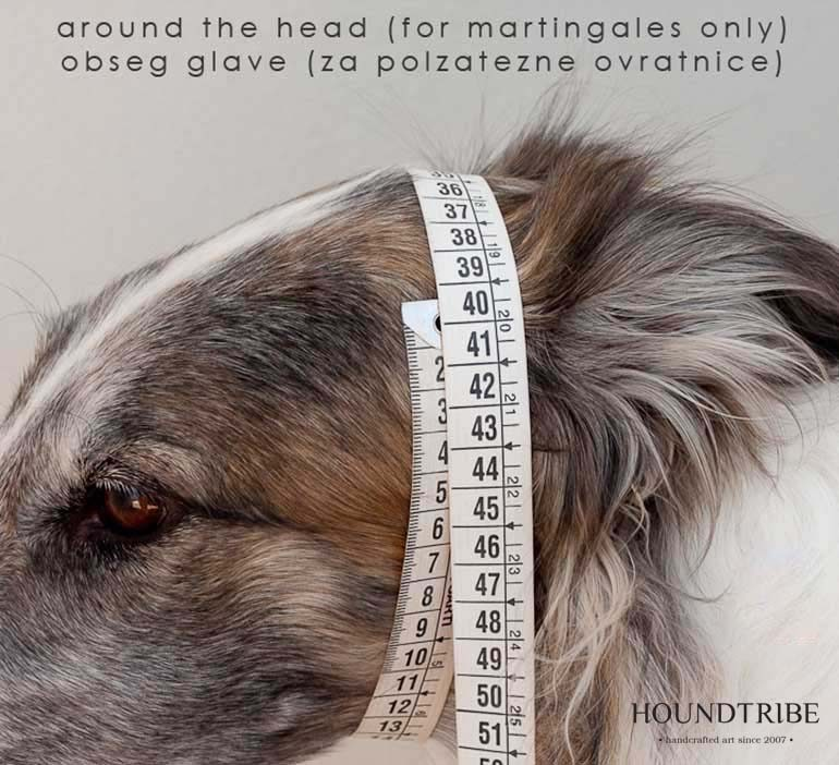 dog head measurements