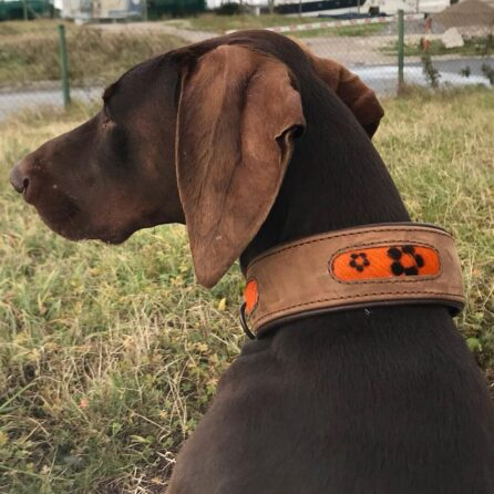 leather dog matching set
