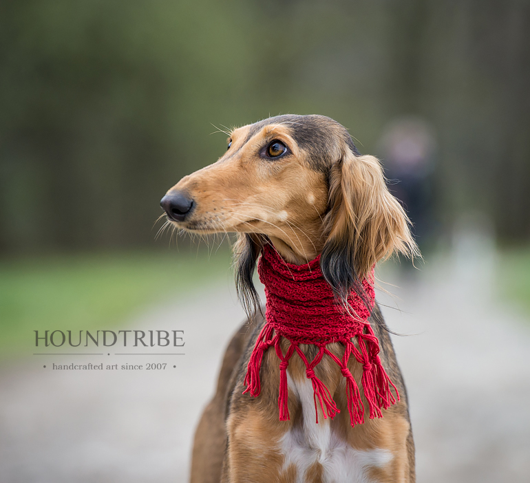 Saluki wearing a dog snood