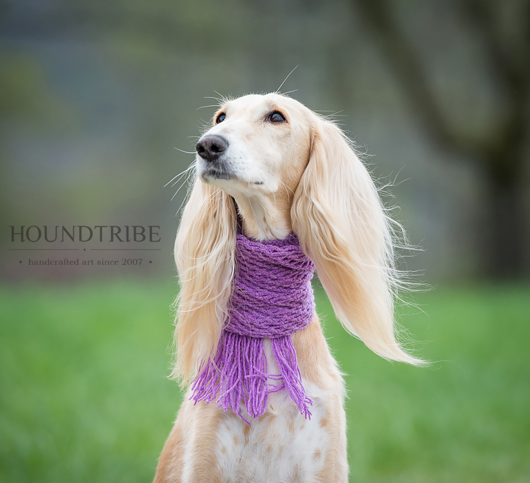 Saluki with a purple snood